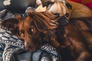 animals relaxing in pet friendly apartment in Wilmington, DE